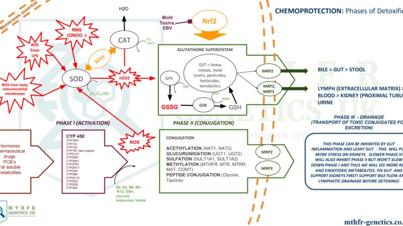 Enzymy antyoksydacyjne
